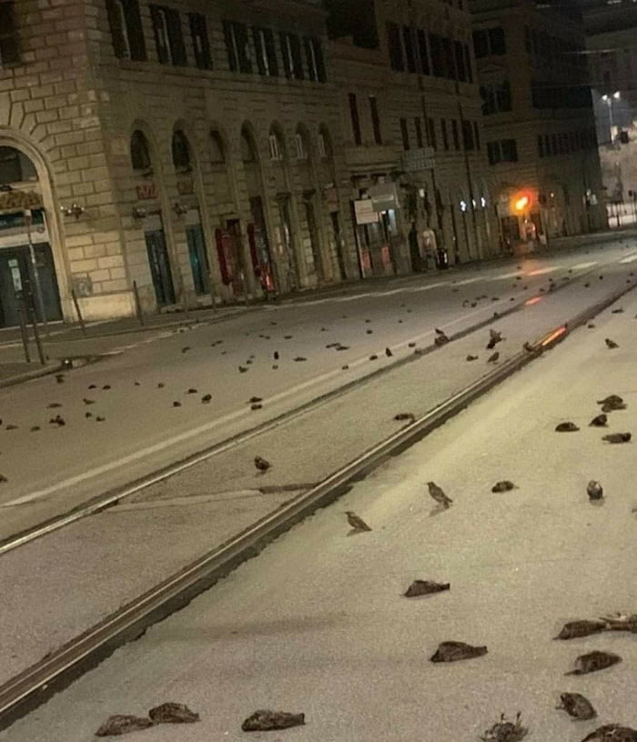 Dead birds after fireworks in Rome 2021 has a nice start...
