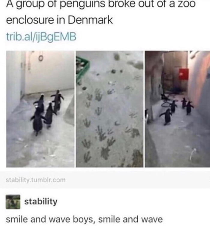 Kowalski analyzed the shit out of this zoo