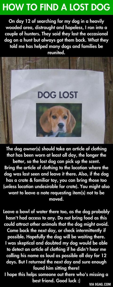 If you lost your dog this is going to help you