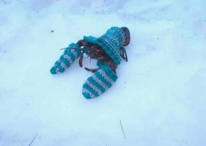 Lobster ready to play in snow