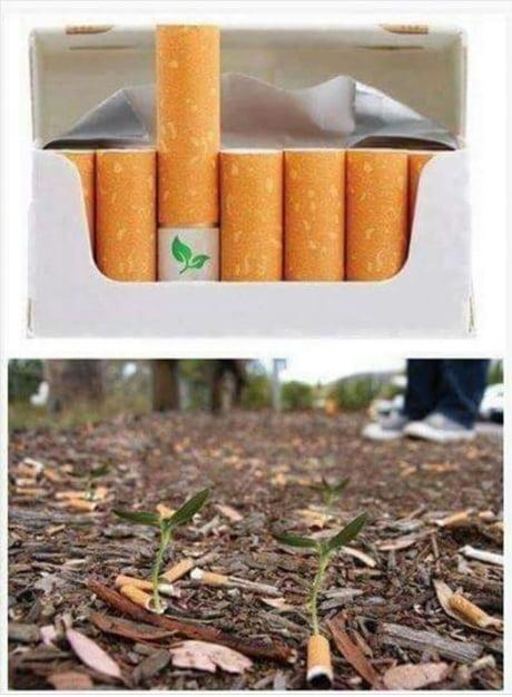 Biodegradable cigarette filter. Kill yourself save the planet. win-win