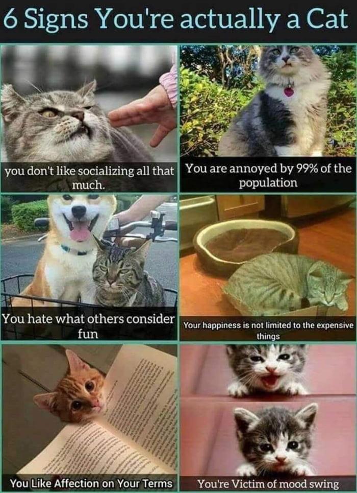 Guess I'm a cat then..