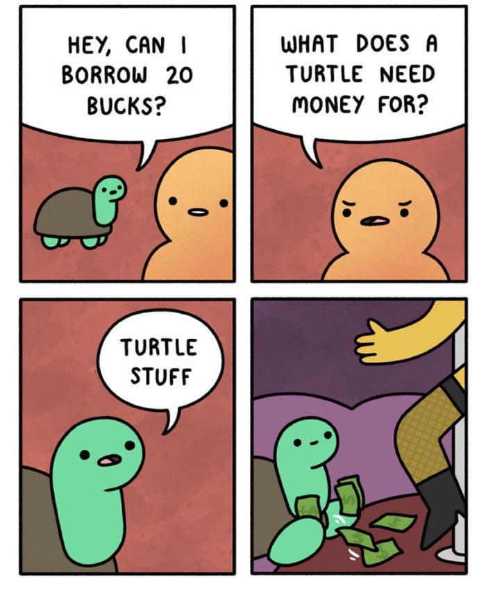 Turtle Stuff