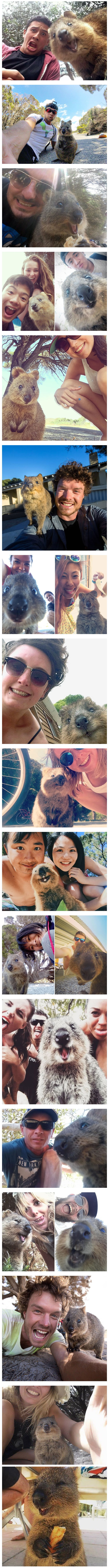 Australians Taking Selfies With Quokkas