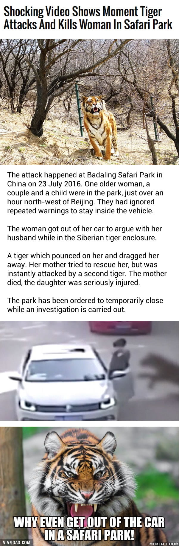 Woman mauled to death by a tiger after stepping out of car in a safari park in Beijing. What in the world were they thinking about!
