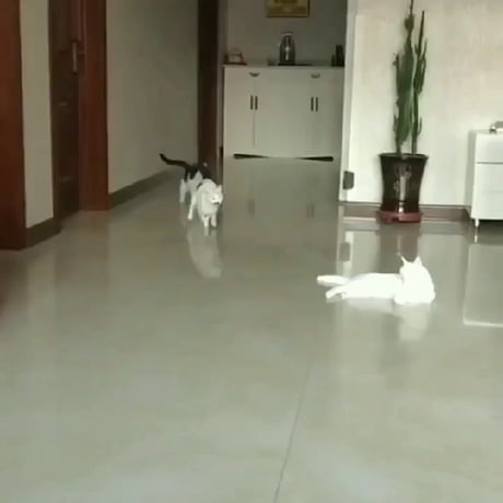 Video: Come here kitty!