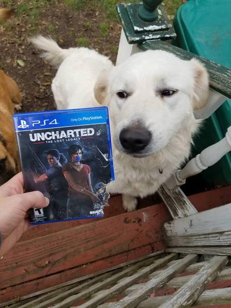 My naughty dog ate my game by naughty dog.