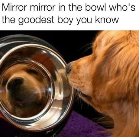 Hu da good boi?