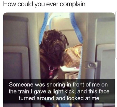 True Story doggo