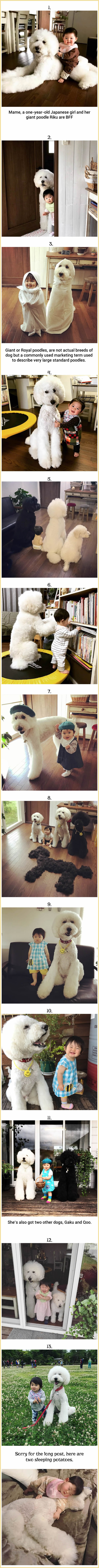 Cute Baby And Fluffy Giant Poodles Make The Most Perfect Squad