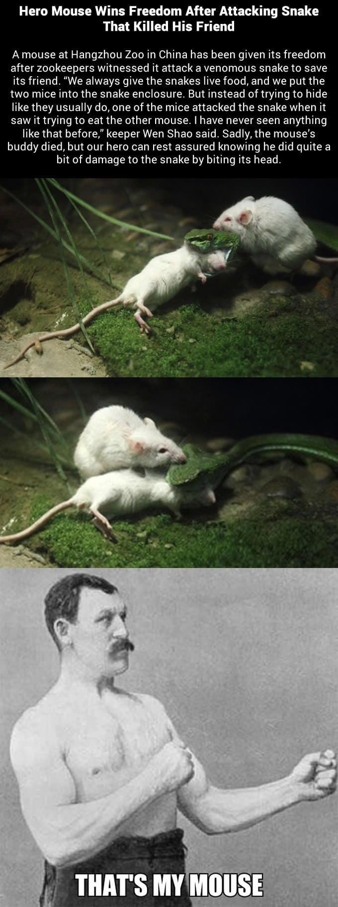 Imagini amuzante si haioase - Brave little guy