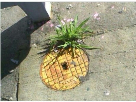 Who lives in a pineapple under the street??