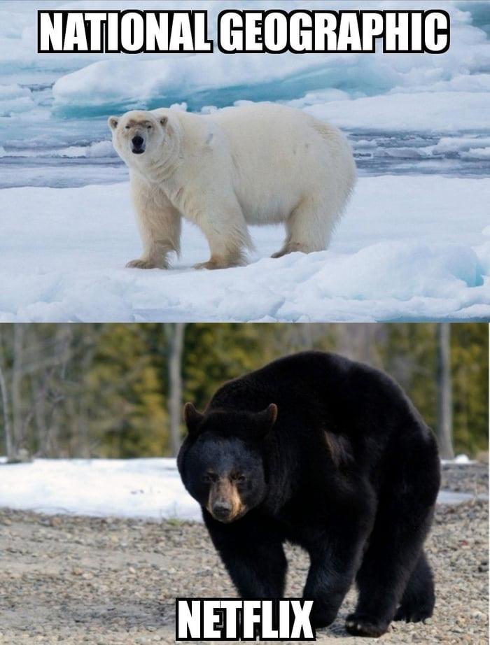 Vamos assistir a um documentário sobre ursos polares