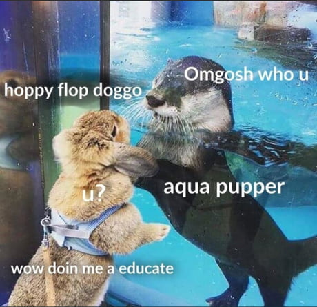 Water doggo meets pupper.