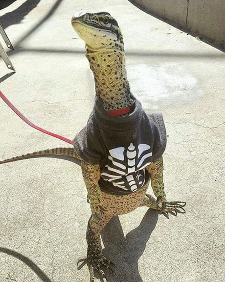 This lizard has more style than any of us will ever have