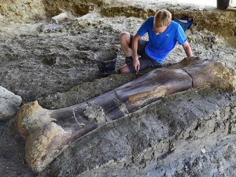 140 million year old, 500kg dinosaur femur discovered in France