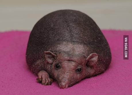 Ball sacks shaved Category:Photographs of