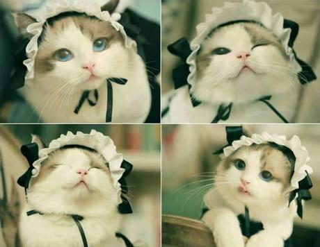 Cute cat *_*