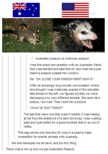 Australian Possum Vs American Opossum