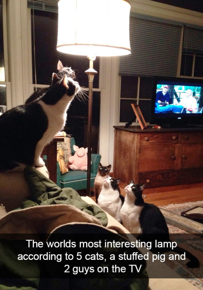 Snapchats, funny, cat - 15+ Hilarious Cat Snapchats Prove That Human Will Never Understand Cats