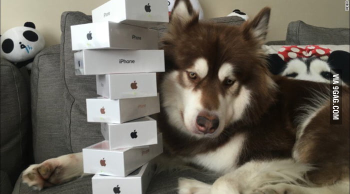 A Chinese billionaire's son bought his dog eight iPhone 7s.