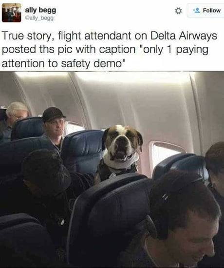 A good boye indeed