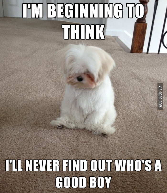May I introduce - melancholy Maltese