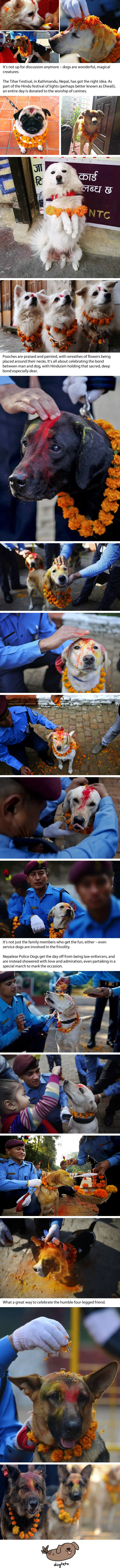 Dogs Are Blessed With Colourful Tilaka During The Tihar Festival In Nepal