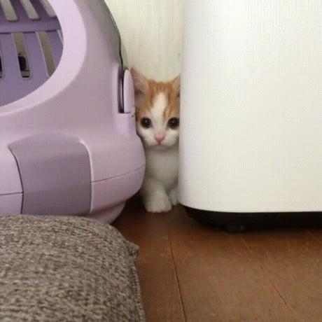 Oh no, I am stuck